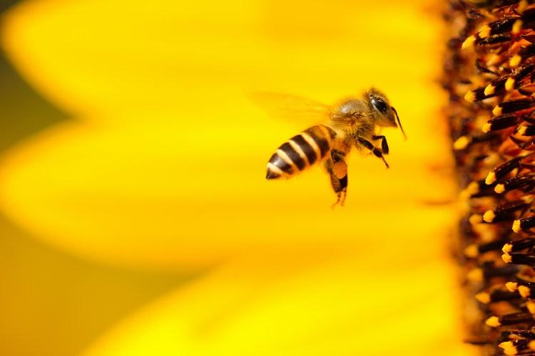 科普 - 蜂蛰伤怎么处理?急救小知识