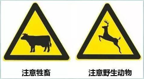 科普 :驾车遇到动物,我该怎么办?