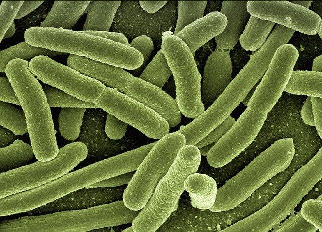 什么是炭疽?怎样预防炭疽?