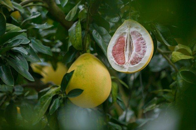 如何挑选一个好柚子?红心柚or白心柚?